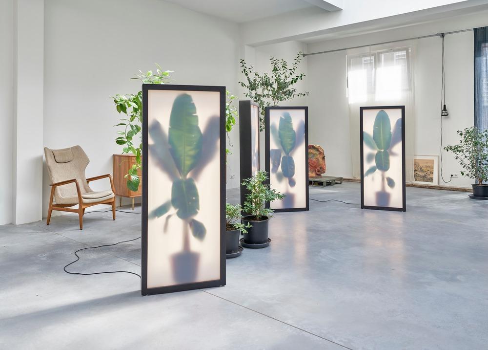 REM_atelier_growing_plants_indoor