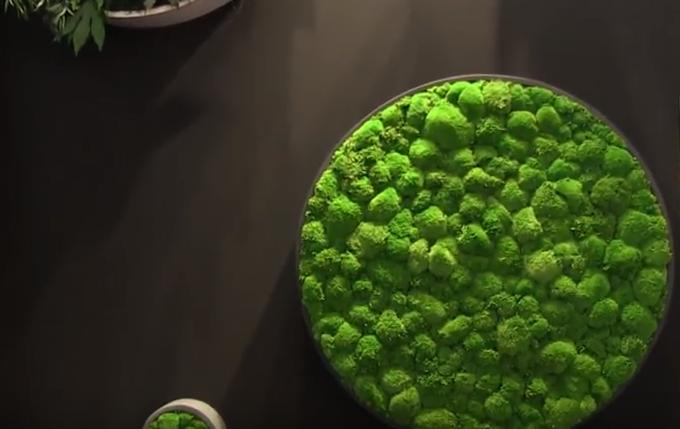 Design végétal à Maison & Objet avec Cadre Vert