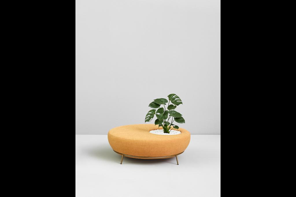 design_paula_rosales_missana_fauteuil_assise_plante