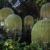 Découvrez Rainforet 4, de Patrick Nadeau, au Festival international des Jardins de Chaumont  !